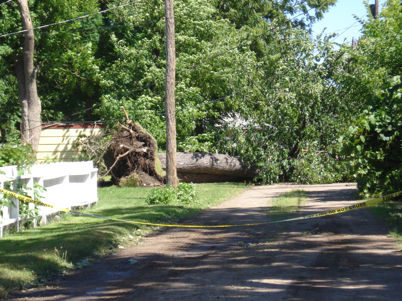 Tree uprooted