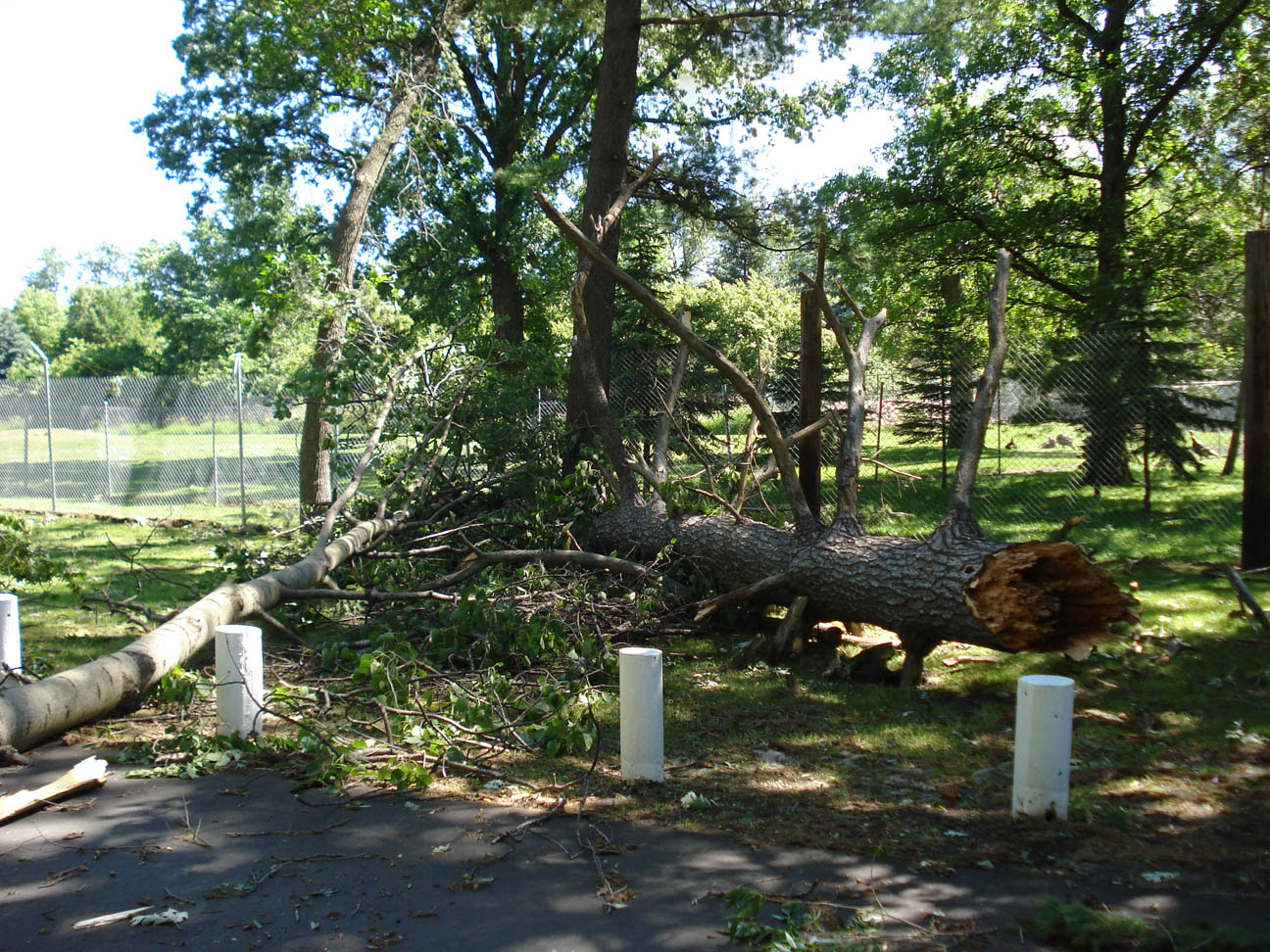 Snapped trees in Pine Grove Park, Little Falls, MN, July 12, 2008