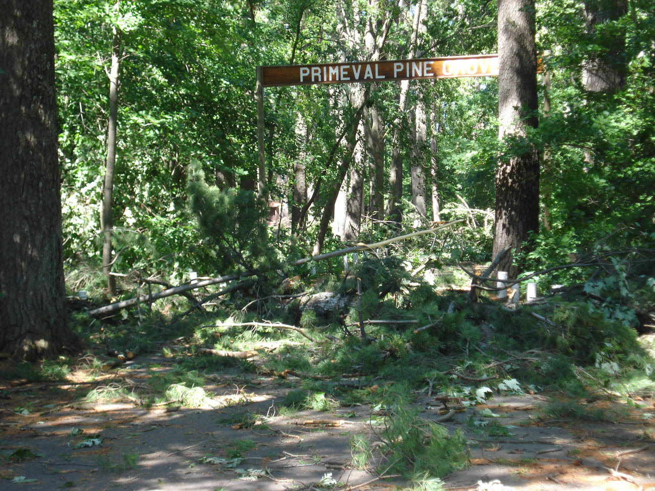 A mess of branches, Pine Grove Park, Little Falls, MN, July 12, 2008