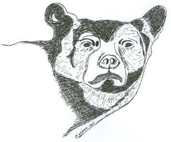 Drawing by Mary Warner, 2005
